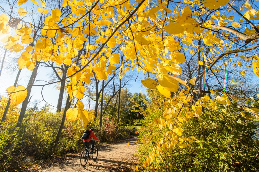 Pedestrians ride their bicycles and walk on a colorful tree-lined path